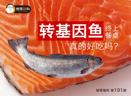 【榕哥烙科】第191期:转基因鱼终上餐桌,真的好吃吗?