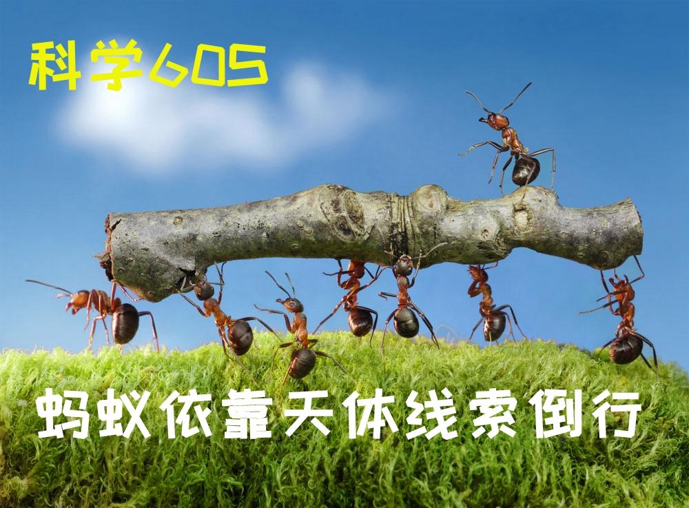 【科学60S】蚂蚁依靠天体线索倒行