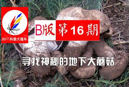 【科普大篷车】寻找神秘的地下大蘑菇