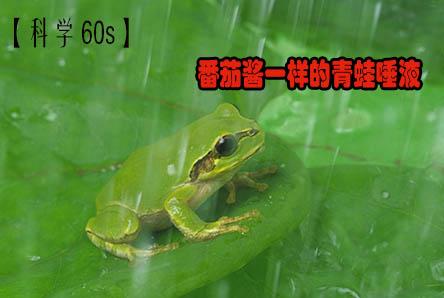 【科学60S】番茄酱一样的青蛙唾液