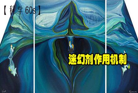 【科学60s】迷幻剂作用机制