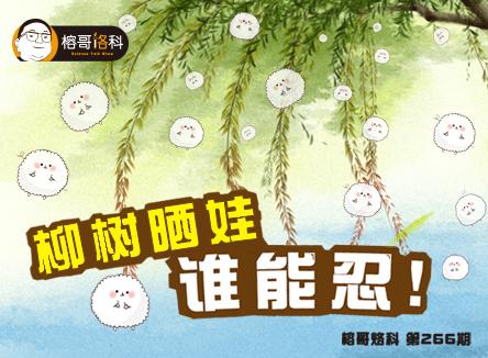 【榕哥烙科】第266期:柳树晒娃谁能忍?