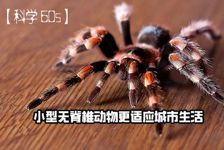 【科学60S】小型无脊椎动物更适应城市生活