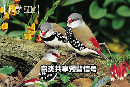 【注册鹿鼎60S】鸟类共享预警信号