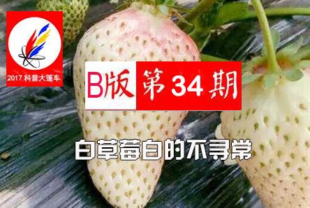 【科普大篷车】白草莓白的不寻常