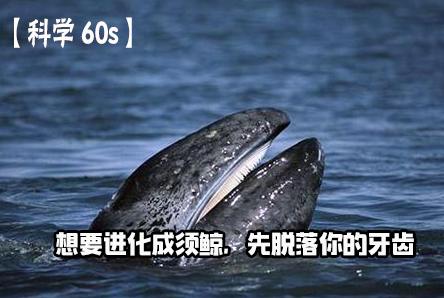 【科学60S】想要进化成须鲸,先脱落你的牙齿