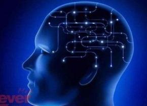 你了解你的大脑吗?揭秘关于人脑的几个事实